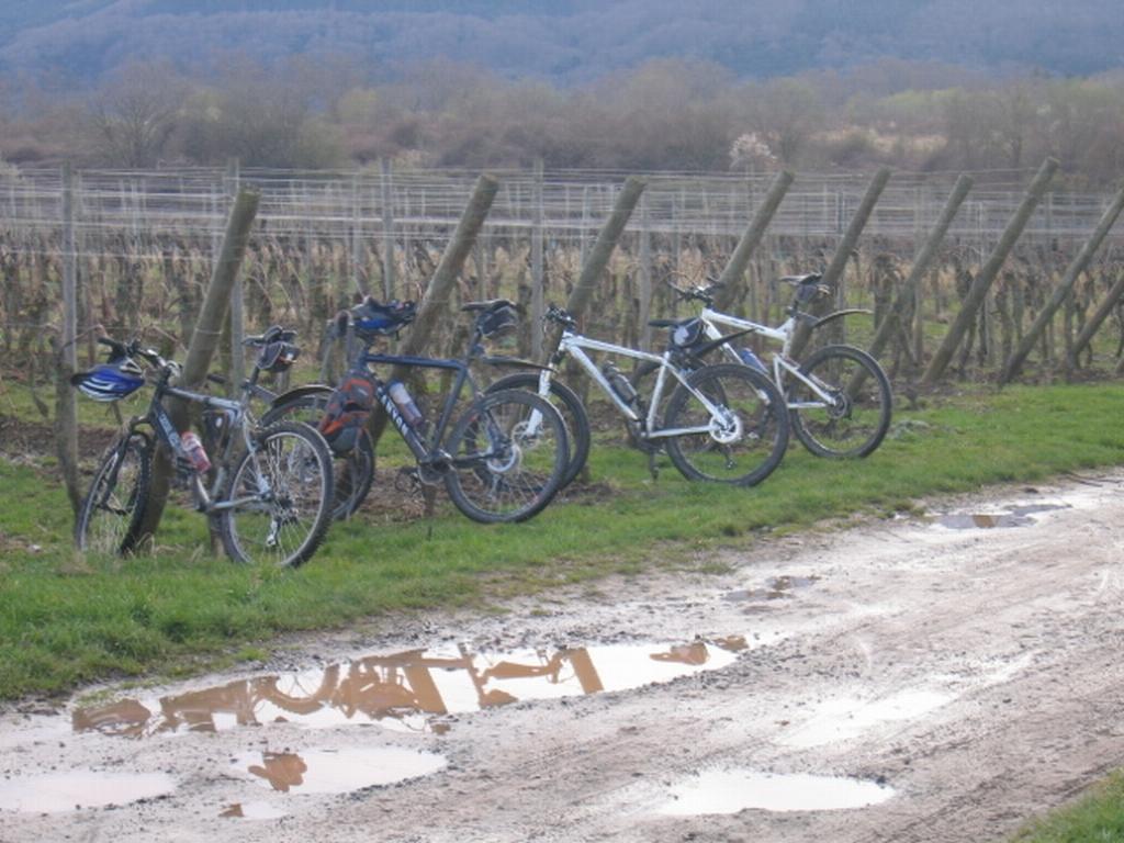 VTT Alsace/Vosges, Ste Odile, Barr, Ungersberg, Champ du feu IMG_0936